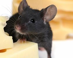 Рейтинг лучших отпугивателей крыс и мышей